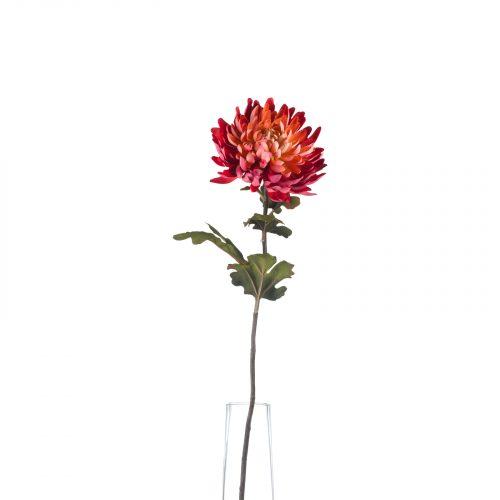 Autumn Spider Chrysanthemum - Cosy Home Interiors