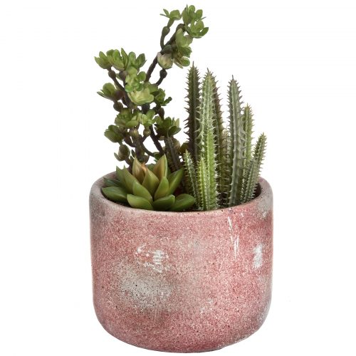 Potted Cacti and Succulent - Cosy Home Interiors