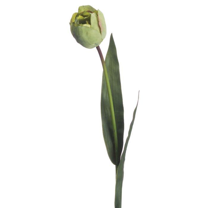 Green Tulip - Cosy Home Interiors