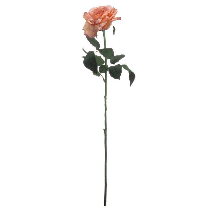 Autumn Peach Silk Garden Rose - Cosy Home Interiors