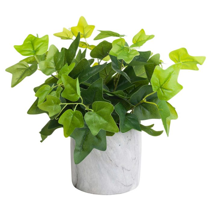 Potted Ivy House Plant - Cosy Home Interiors