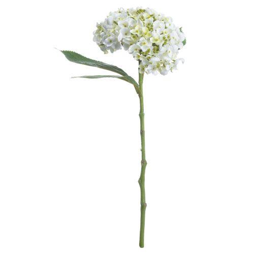 White Lace Cap Hydrangea - Cosy Home Interiors