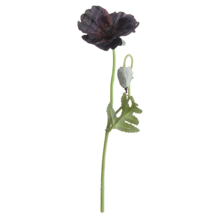 Black Wild Poppy - Cosy Home Interiors