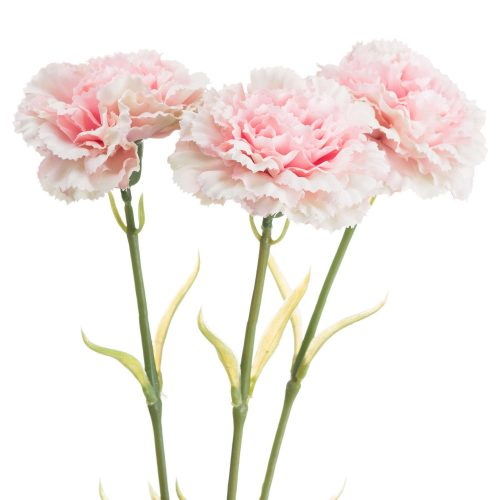 Pale Pink Carnation - Cosy Home Interiors