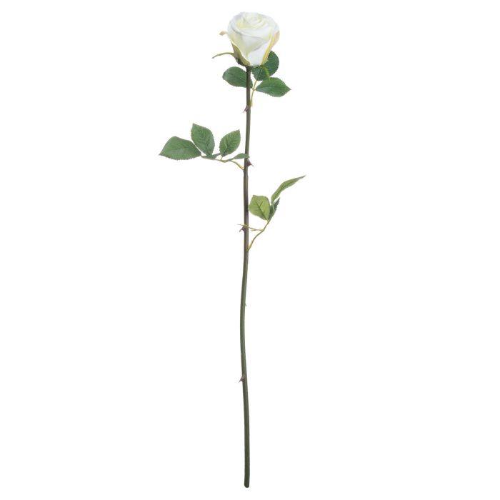 Single White Rose - Cosy Home Interiors