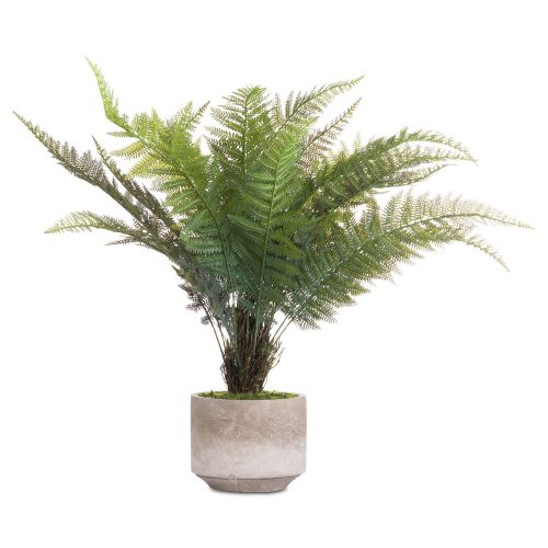 Stone Potted Boston Fern - Cosy Home Interiors