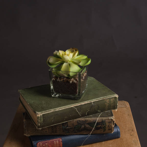 Miniature Succulent in Glass Pot - Cosy Home Interiors