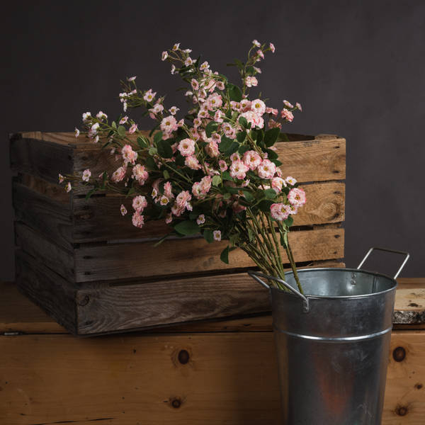 Pink Wild Meadow Rose - Cosy Home Interiors