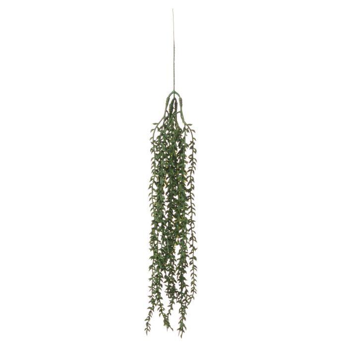 Senecio String - Cosy Home Interiors