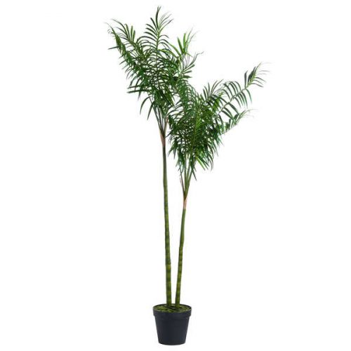 Large Parlour Palm Tree - Cosy Home Interiors