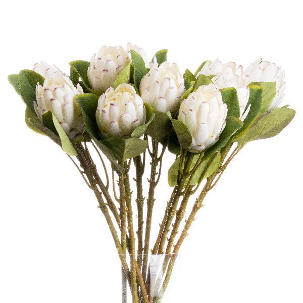 Closed White Protea - Cosy Home Interiors