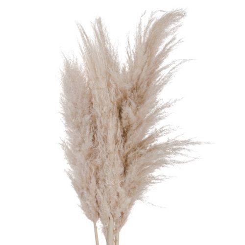 Cream Pampas grass - Cosy Home Interiors