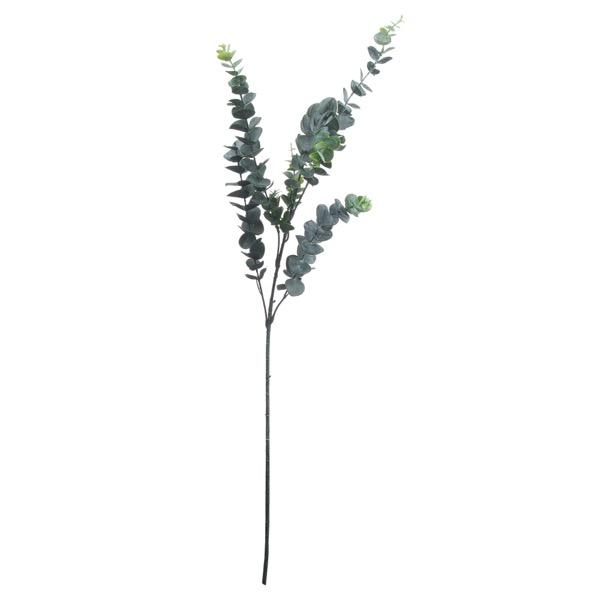 Silver Dollar Eucalyptus - Cosy Home Interiors