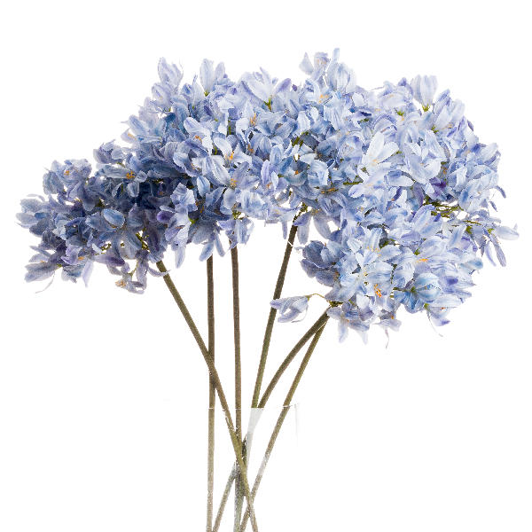 Light Blue Large Headed Agapanthus - Cosy Home Interiors