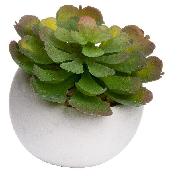 Miniature Lola Succulent In Cement Pot - Cosy Home Interiors
