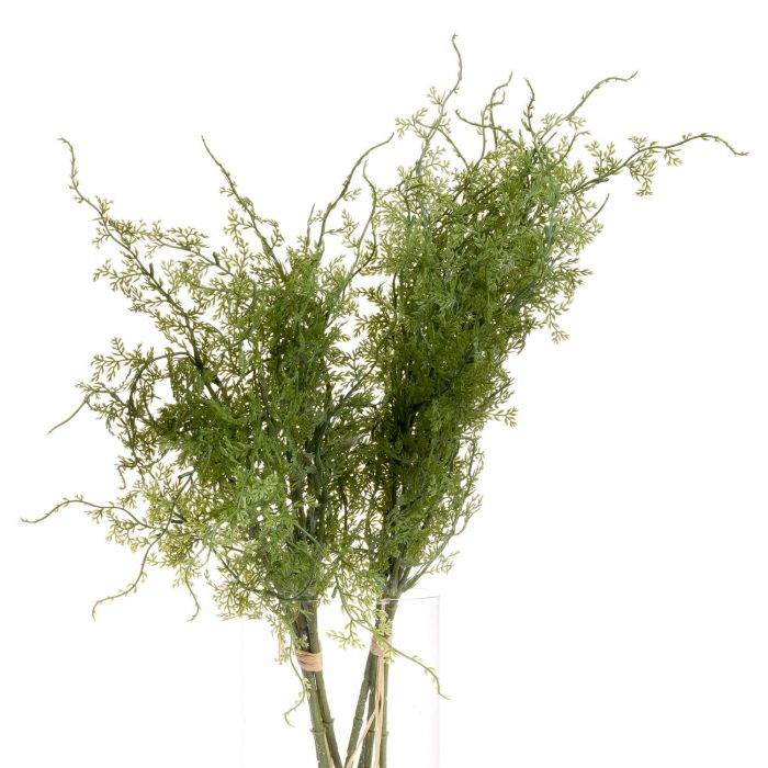 Asparagus Fern Bunch - Cosy Home Interiors