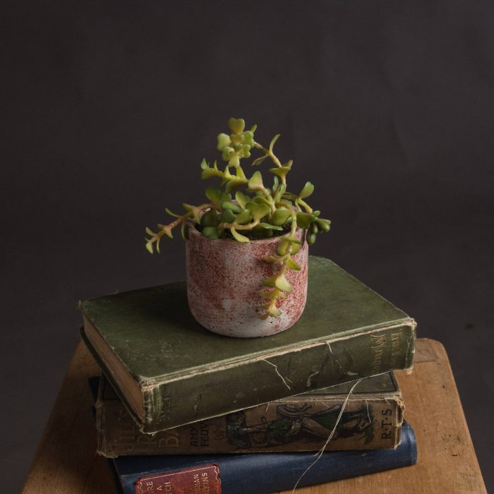 Miniature Potted Succulent - Cosy Home Interiors