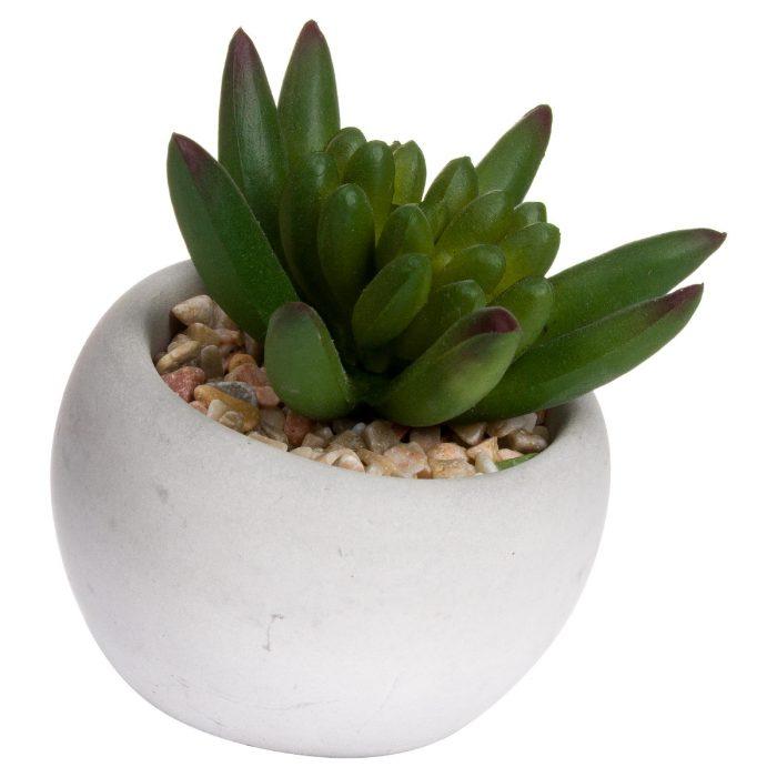 Miniature Little Jewel Succulent In Cement Pot - Cosy Home Interiors