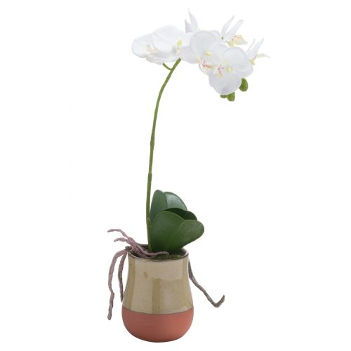 Orchid In Terracotta Glazed Pot - Cosy Home Interiors