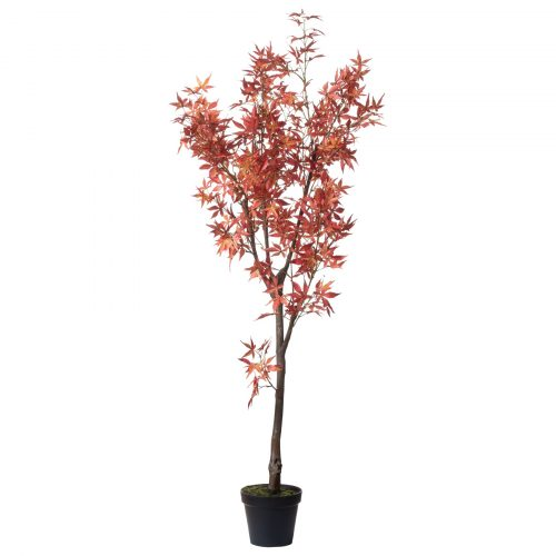 Large Acer Tree - Cosy Home Interiors