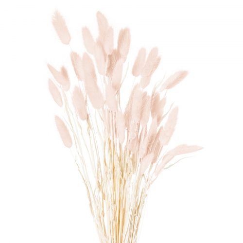 Dried Pale Pink Bunny Tail Bunch Of 40 - Cosy Home Interiors