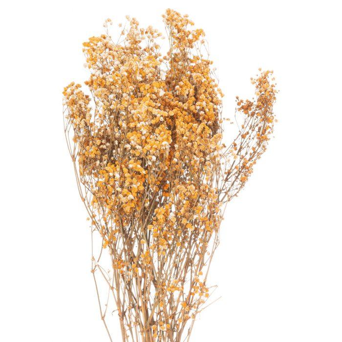Dried Orange Babys Breath Bunch - Cosy Home Interiors